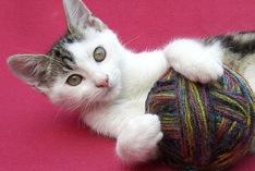 Journée mondiale des chats 2021
