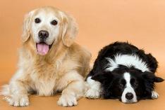 Journée mondiale des chiens 2021