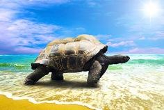 Journée mondiale des tortues 2019