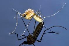 Journée mondiale de moustique 2019