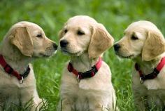 Journée nationale du chien 2016