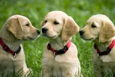Journée nationale du chien 2018